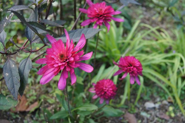 ガーデン植花夢_e0181373_22123633.jpg