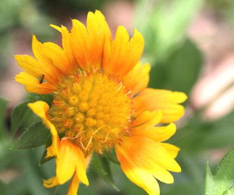 ◆花と虫_e0154682_21450594.jpg
