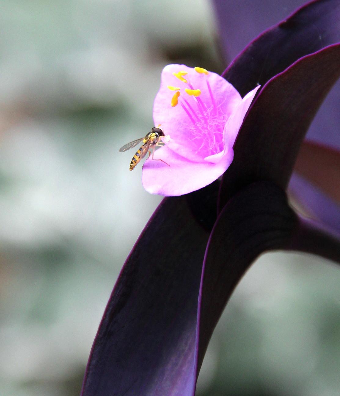 ◆花と虫_e0154682_21453360.jpg