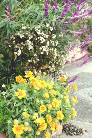 ◆花と虫_e0154682_21464146.jpg