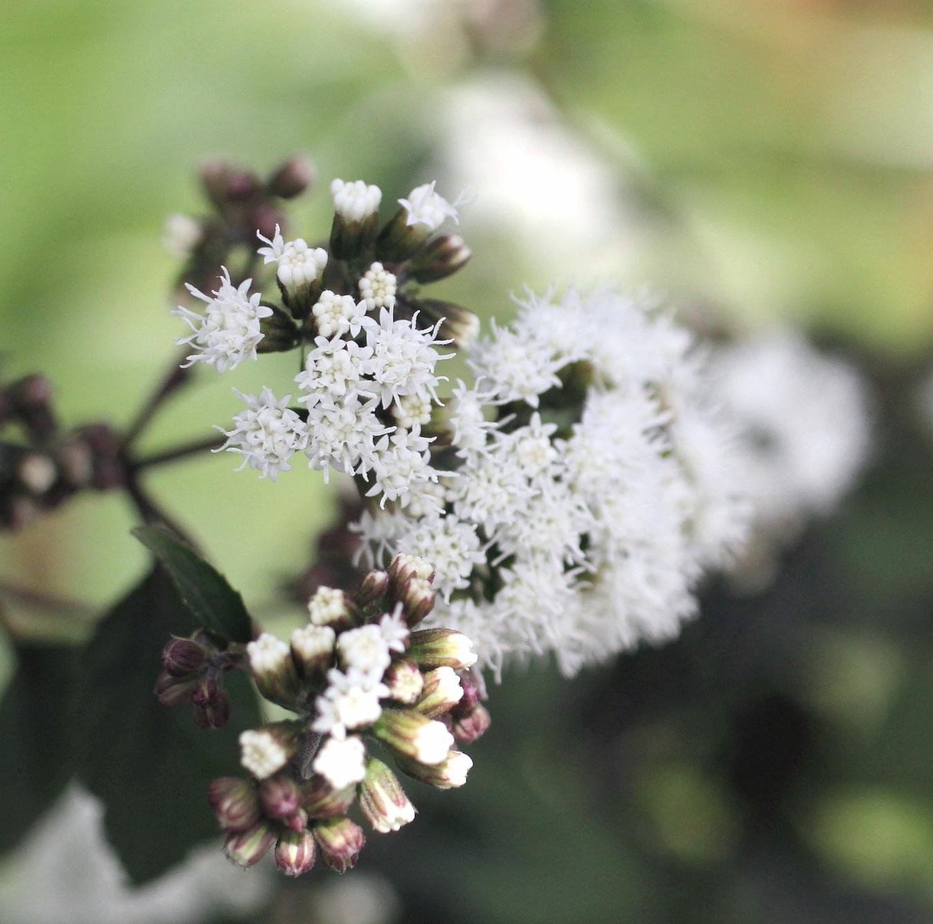 ◆花と虫_e0154682_21465321.jpg