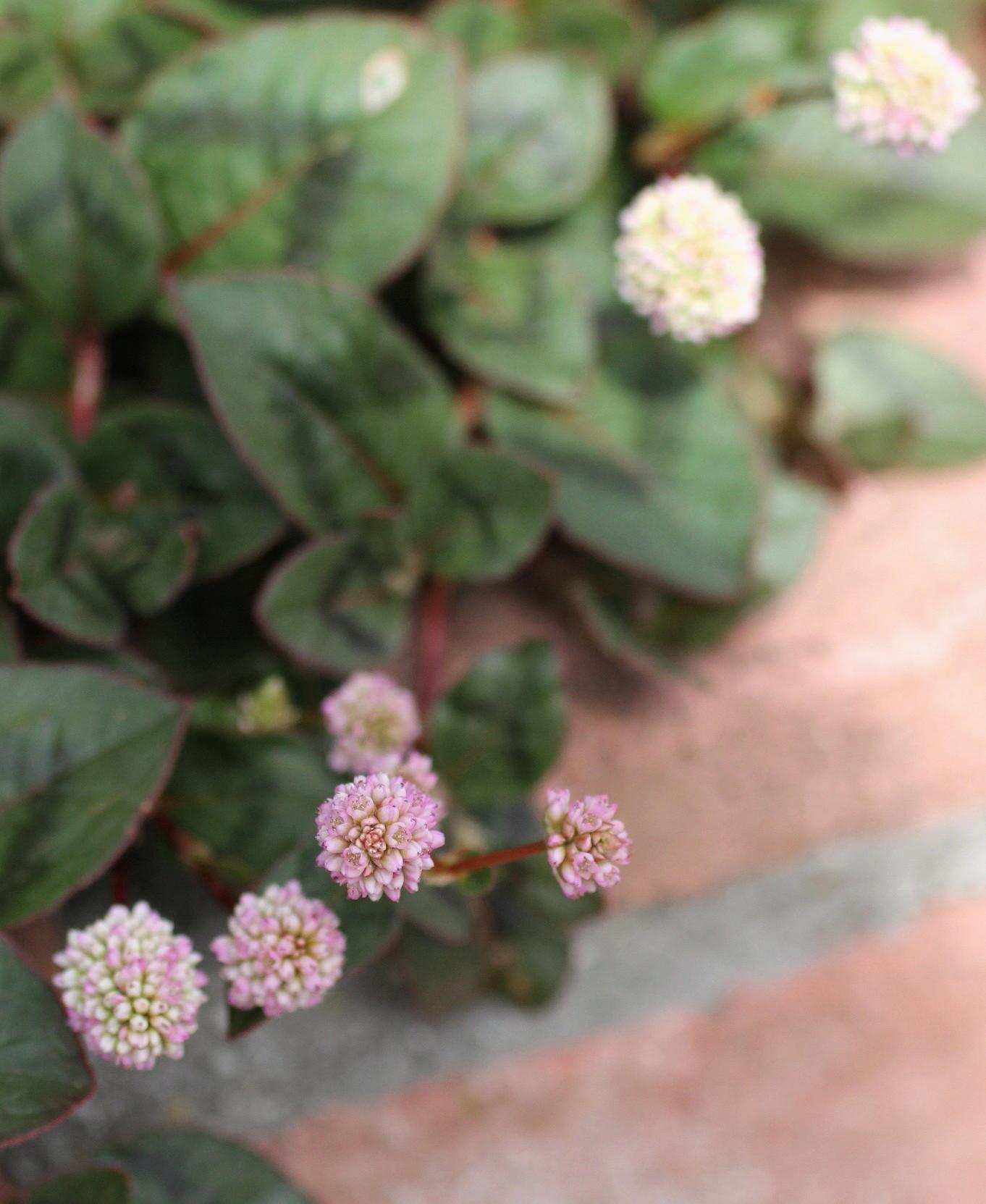 ◆花と虫_e0154682_21470780.jpg