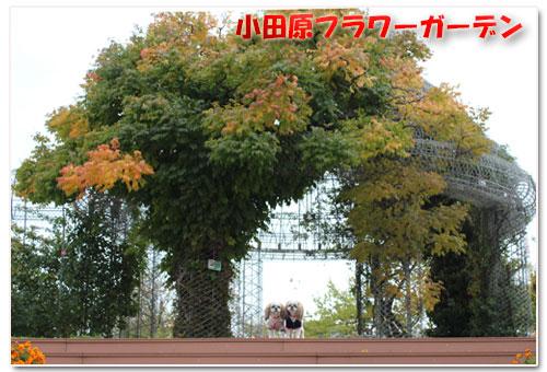 b0024183_21294025.jpg
