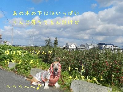 f0205887_18391568.jpg