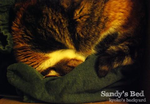 Sandyがベットにしているのは…_b0253205_00171998.jpg