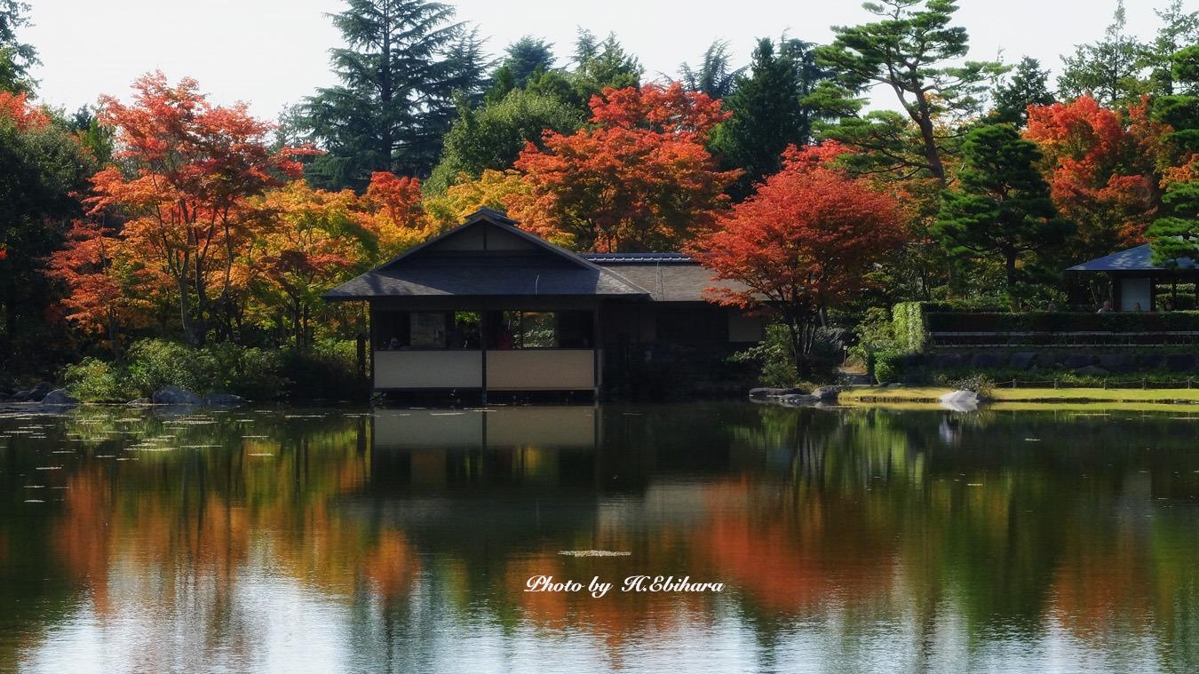 紅葉になってきた東京_e0070307_2045258.jpg
