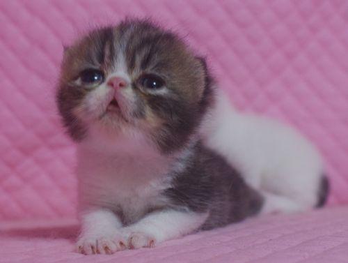 エキゾの赤ちゃん 18日目_e0033609_17142376.jpg