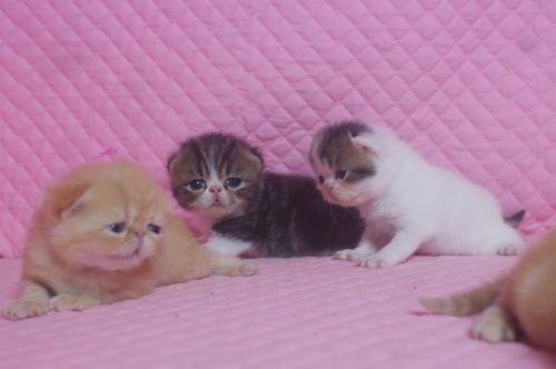 エキゾの赤ちゃん 18日目_e0033609_1714485.jpg