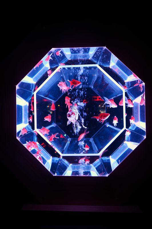アートアクアリウム城~京都・金魚の舞~ 其の一_f0032011_201058100.jpg