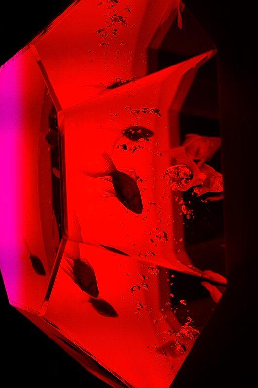 アートアクアリウム城~京都・金魚の舞~ 其の一_f0032011_2011710.jpg