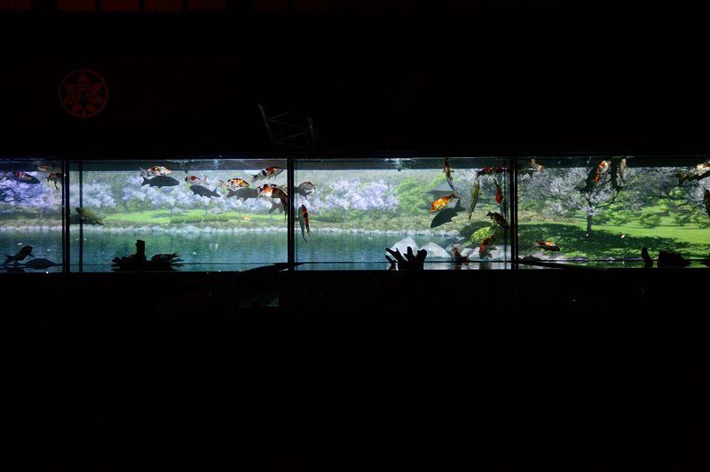 アートアクアリウム城~京都・金魚の舞~ 其の一_f0032011_20659100.jpg
