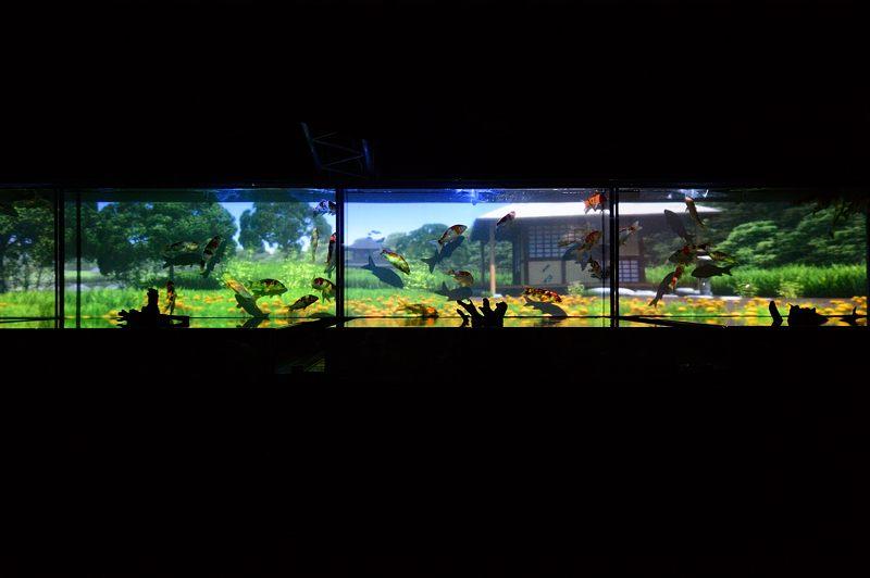 アートアクアリウム城~京都・金魚の舞~ 其の一_f0032011_207715.jpg
