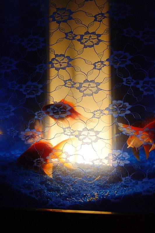 アートアクアリウム城~京都・金魚の舞~ 其の一_f0032011_2091130.jpg