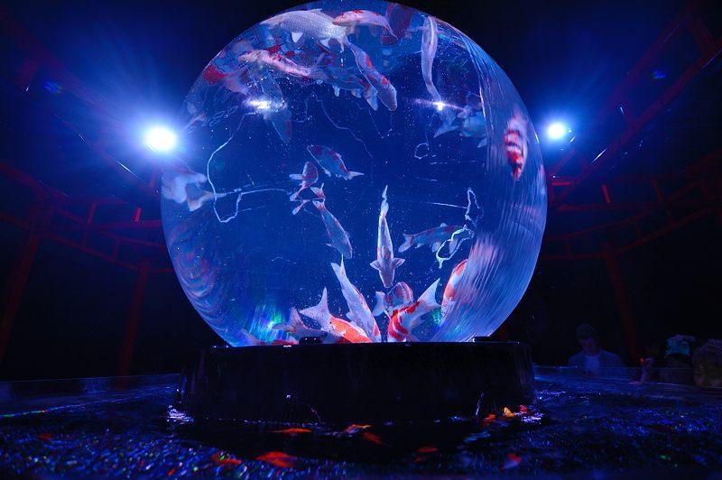 アートアクアリウム城~京都・金魚の舞~ 其の一_f0032011_2094165.jpg