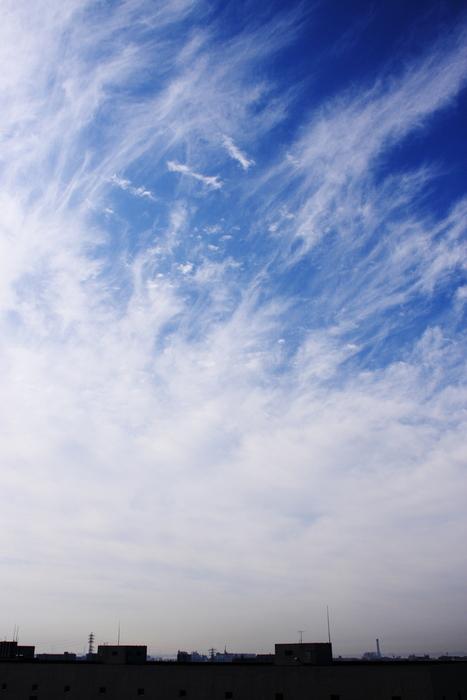 すじ雲 (巻雲)_b0268615_10453393.jpg