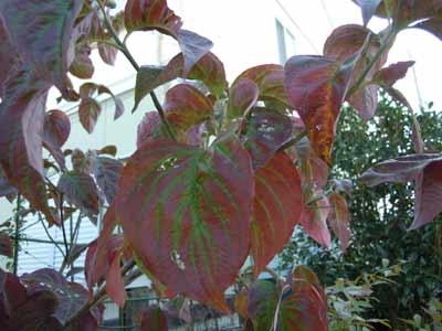 秋をうろつく_e0097534_16525126.jpg