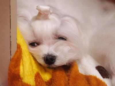 エンジェルの長〜いお耳の毛ッケで可愛くしよう〜_b0001465_18344726.jpg