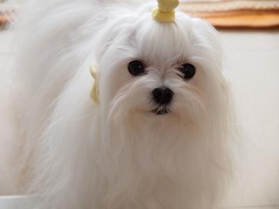 エンジェルの長〜いお耳の毛ッケで可愛くしよう〜_b0001465_18373376.jpg