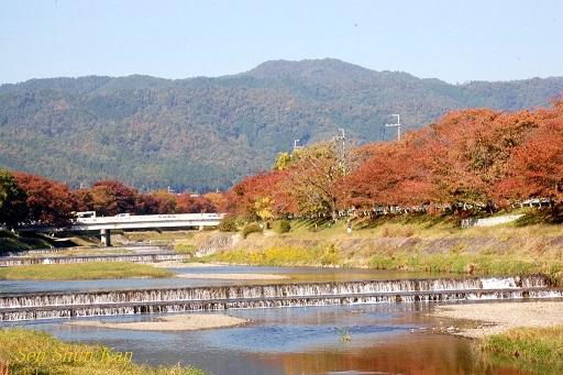 賀茂川の紅葉 2014年10月29日_a0164068_8513174.jpg