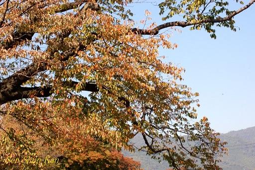 賀茂川の紅葉 2014年10月29日_a0164068_852152.jpg