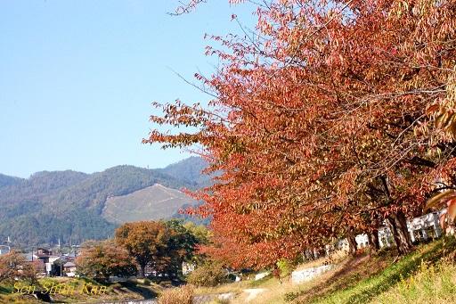 賀茂川の紅葉 2014年10月29日_a0164068_8532564.jpg