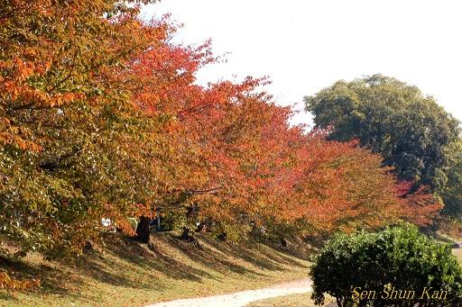 賀茂川の紅葉 2014年10月29日_a0164068_853298.jpg