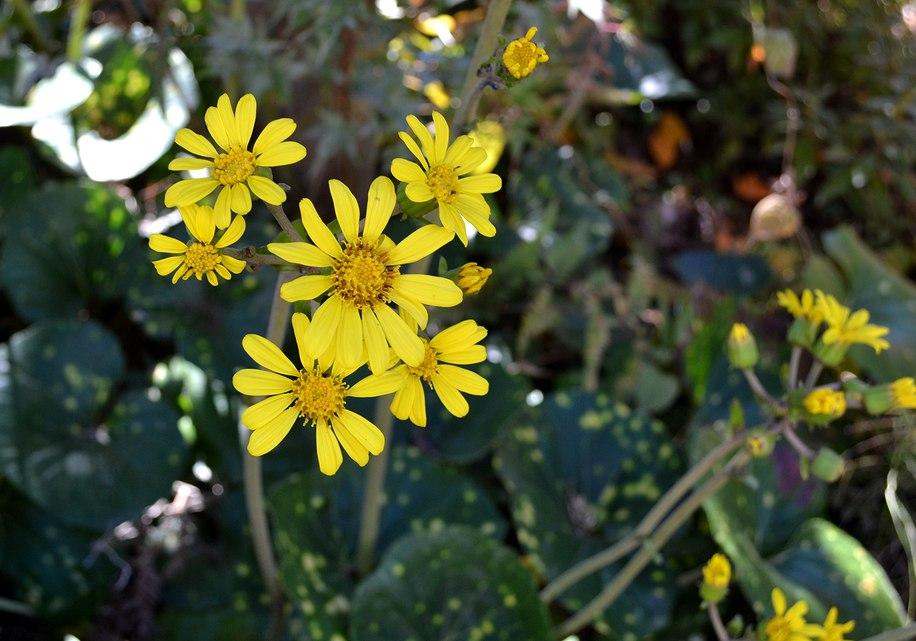 主なき庭の秋_b0102572_15523943.jpg
