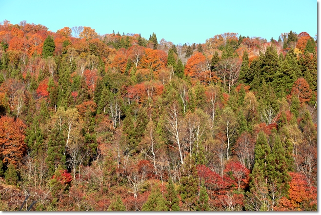 秋の長野へ・・・ 佐久でキャンプと カヤの平 と 小布施で栗♪ _f0179404_6502573.jpg