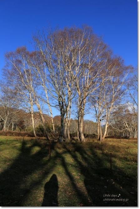 秋の長野へ・・・ 佐久でキャンプと カヤの平 と 小布施で栗♪ _f0179404_6522541.jpg