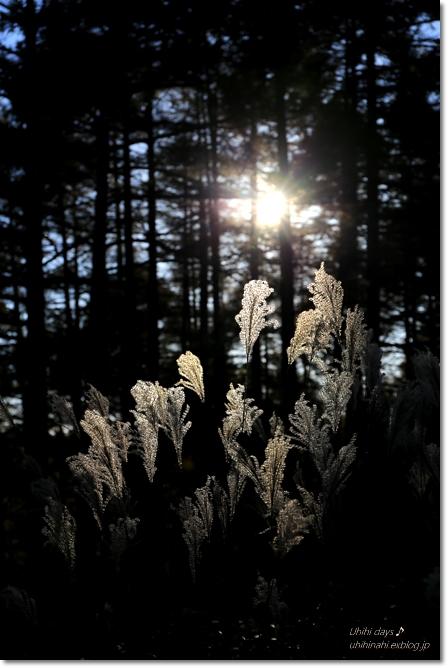 秋の長野へ・・・ 佐久でキャンプと カヤの平 と 小布施で栗♪ _f0179404_6523749.jpg