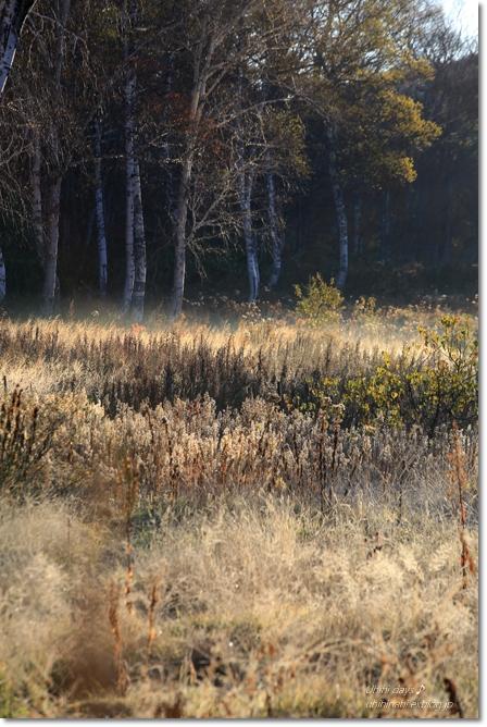 秋の長野へ・・・ 佐久でキャンプと カヤの平 と 小布施で栗♪ _f0179404_6544772.jpg