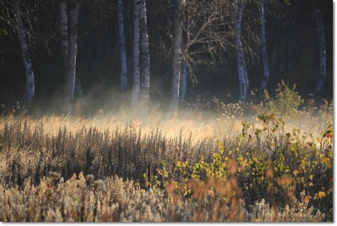 秋の長野へ・・・ 佐久でキャンプと カヤの平 と 小布施で栗♪ _f0179404_656194.jpg
