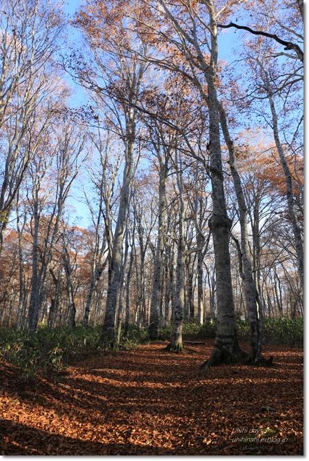 秋の長野へ・・・ 佐久でキャンプと カヤの平 と 小布施で栗♪ _f0179404_6562479.jpg