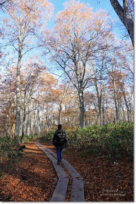 秋の長野へ・・・ 佐久でキャンプと カヤの平 と 小布施で栗♪ _f0179404_656339.jpg