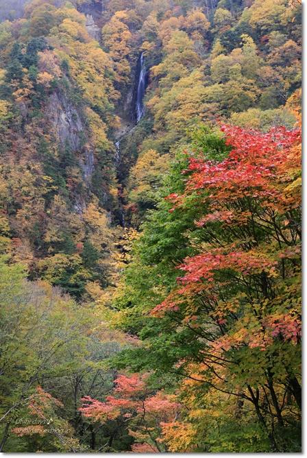 秋の長野へ・・・ 佐久でキャンプと カヤの平 と 小布施で栗♪ _f0179404_6565585.jpg