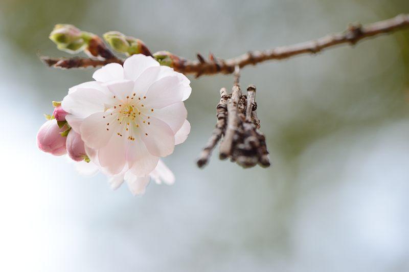 十月桜@平野神社_f0032011_19414234.jpg