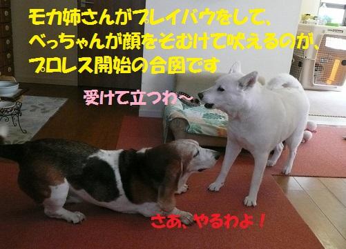 f0121712_1332277.jpg