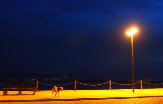 茜色・・・澄んだ碧・・・そして闇に・・・暮れる海辺で_f0152733_6212041.jpg