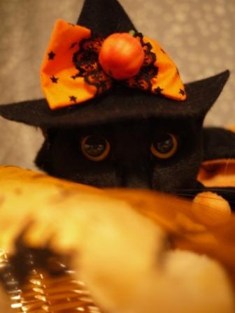 ハロウィン黒猫 てぃぁら編。_a0143140_2129463.jpg