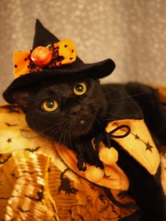 ハロウィン黒猫 てぃぁら編。_a0143140_2134615.jpg