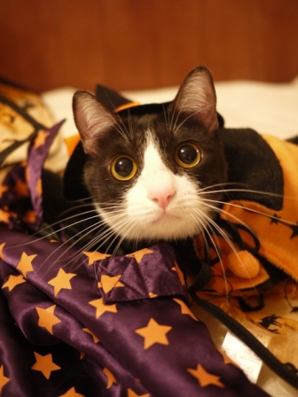 ハロウィン猫 みるきぃ編。_a0143140_21423499.jpg