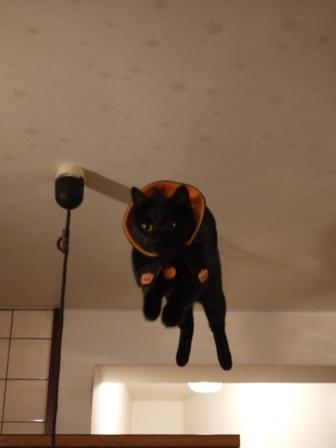 空飛ぶハロウィン猫 てぃぁら編。_a0143140_2211214.jpg