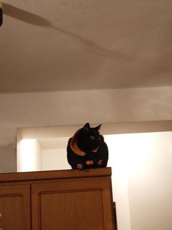 空飛ぶハロウィン猫 てぃぁら編。_a0143140_22115292.jpg