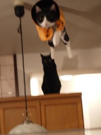 空飛ぶハロウィン猫 ぎゃぉすみるきぃ編。_a0143140_22283425.jpg