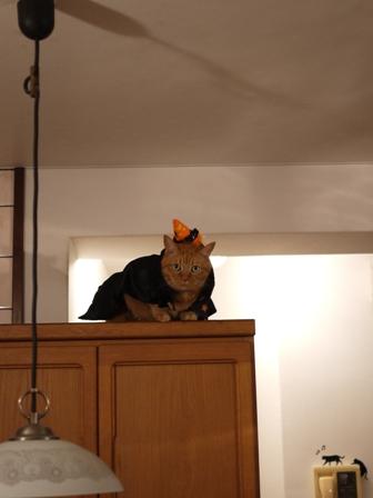 空飛ぶハロウィン猫 しぇる編。_a0143140_22433225.jpg