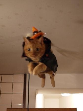 空飛ぶハロウィン猫 しぇる編。_a0143140_2243645.jpg
