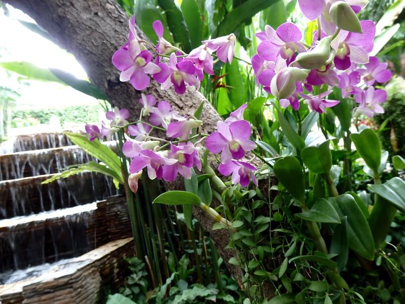 Dusit Thani Hotel  ,  Bangkok_d0103566_1547747.jpg