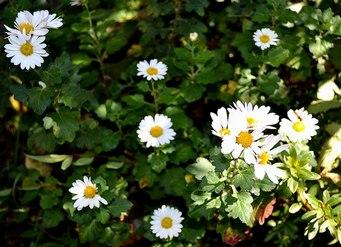 主なき庭の秋_b0102572_14202764.jpg
