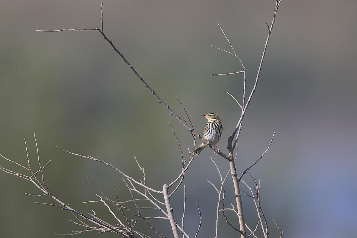 秋の湿原にて(32)_d0125872_2330439.jpg
