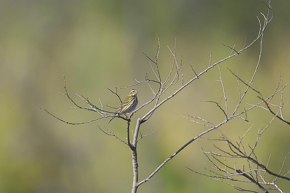 秋の湿原にて(32)_d0125872_23322239.jpg